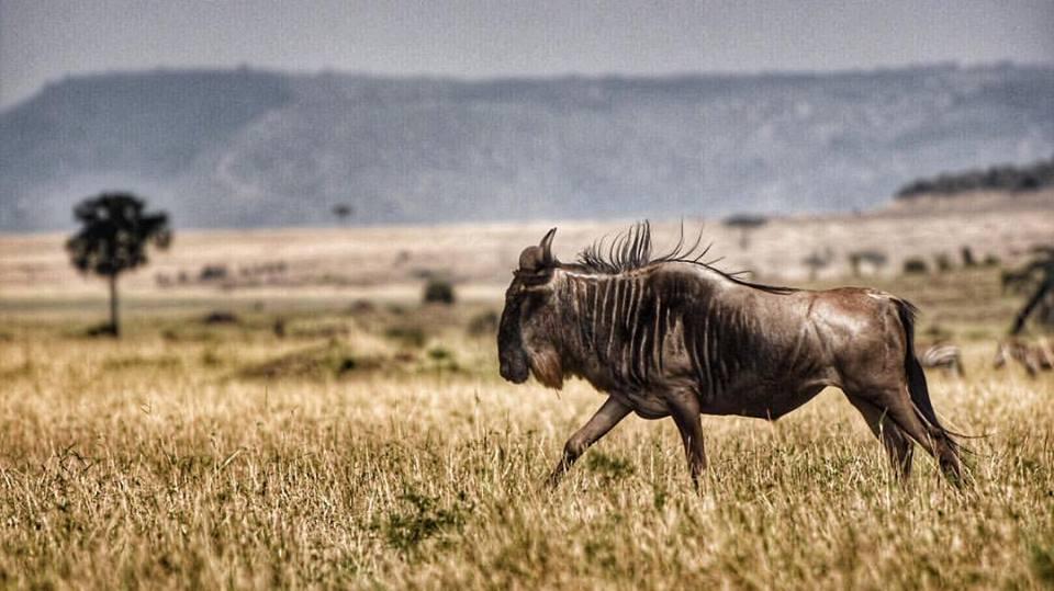 GMCmobile Wildebeest BrendanAllenSoundcloud