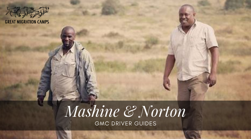 Mashine and Norton - GMC Guides