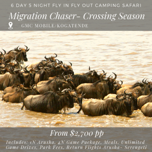 6D_5N MIGRATION CHASER - crossing season migration safari