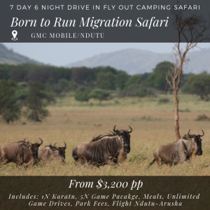 7D_6N Born to Run Calving Season Migration Safari