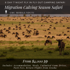 8D_7N Migration Calving Season Migration Safari