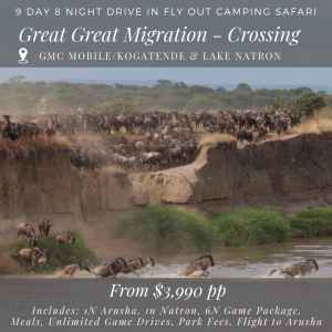 9D_8N Great Great Migration - crossing season migration safari